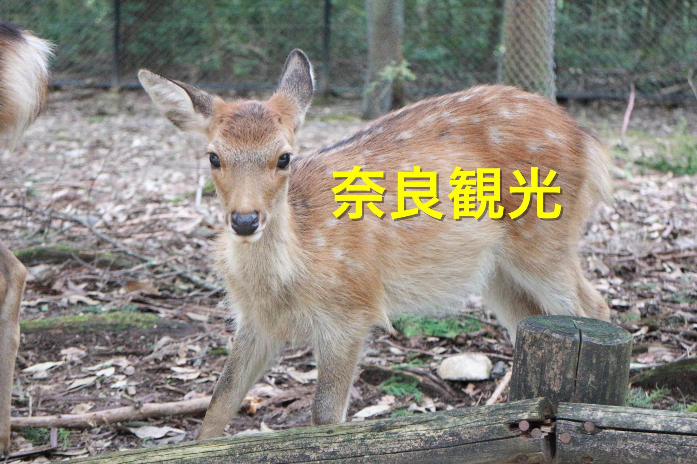 [奈良の世界遺産はこれ一枚!]新大阪から奈良まで往復するのにお得なチケット。