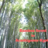 Don't Miss the Bamboo forest in Arashiyama(嵐山)in Kyoto
