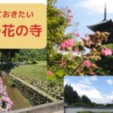 9種類のお花がマスト!京都の花の寺で有名な神社仏閣たち